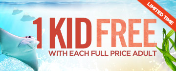 One Kid Free During Winter Family Days at Newport Aquarium